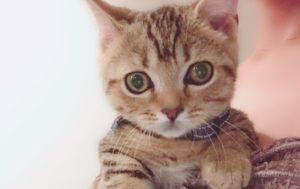 かねこあやの愛猫