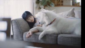 ACジャパンの犬cmの女優