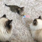 かねこあやの新しい猫